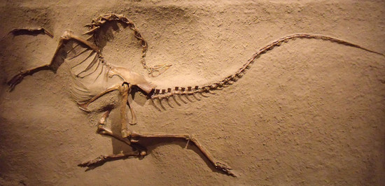 Why Are Most Dinosaur Bones Discovered in North America ...