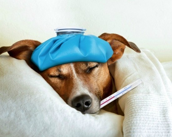 Is Pedialyte Safe for Dogs? | ThriftyFun