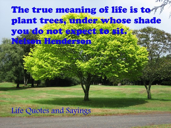 Life Quotes and Sayings: The true meaning of Life is to ...