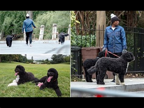 Obama's dogs Sunny and Bo get used to new home - YouTube