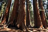 Sequoia ​National Park​