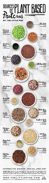 Legumes Beans and Other Plant-Based Proteins