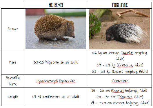 Porcupine Vs Hedgehog Difference | www.pixshark.com ...